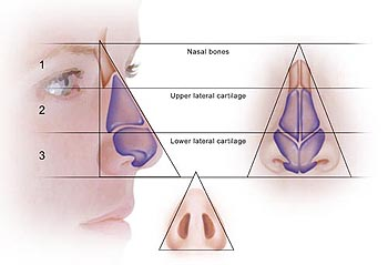 Rhinoplasty – External Triangles